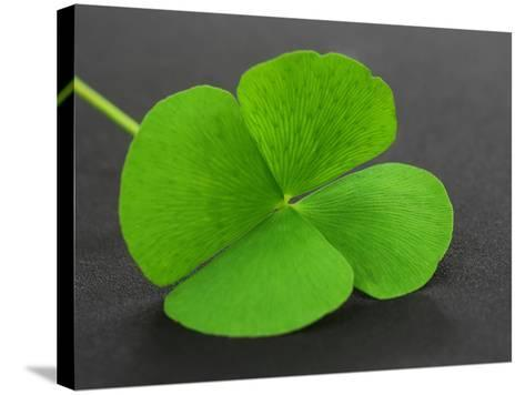 Clover Leaf on Gray Surface- Swapan-Stretched Canvas Print