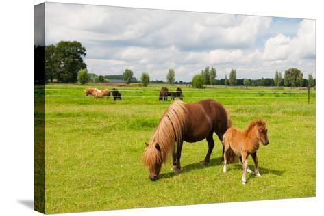 Pony in the Meadows-Ivonne Wierink-Stretched Canvas Print