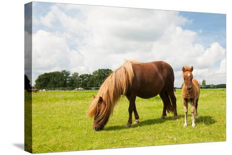 Pony and Young Foal in the Meadows-Ivonne Wierink-Stretched Canvas Print