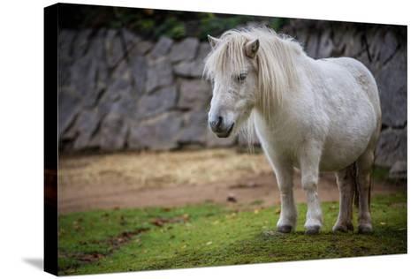 Pony- jurra8-Stretched Canvas Print