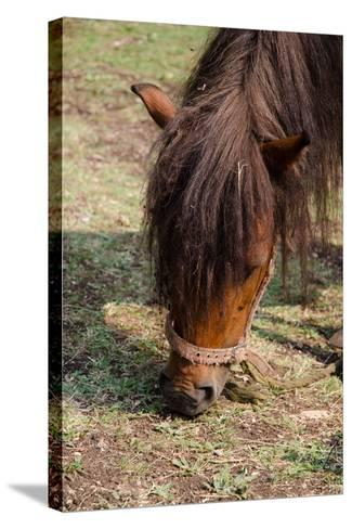 Pony Horse in Nature in Mountain Ethno Village- radulep-Stretched Canvas Print