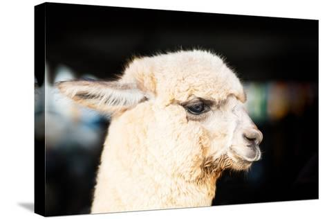 Alpaca-fotoslaz-Stretched Canvas Print