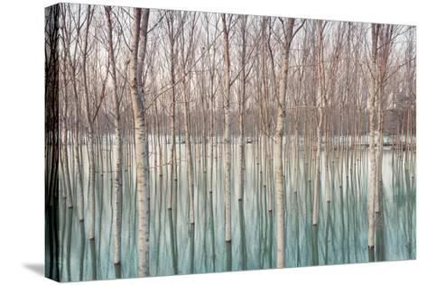 Birches in Flooded Countryside, Natural Pattern-Spumador-Stretched Canvas Print