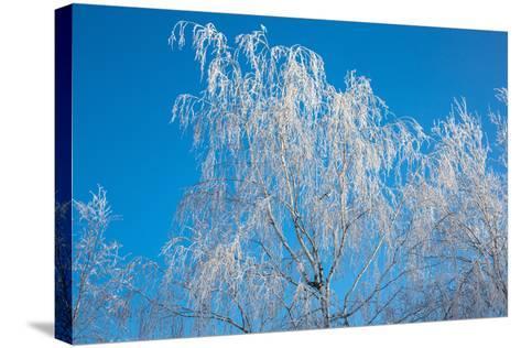 Winter Birch- Atuan-Stretched Canvas Print