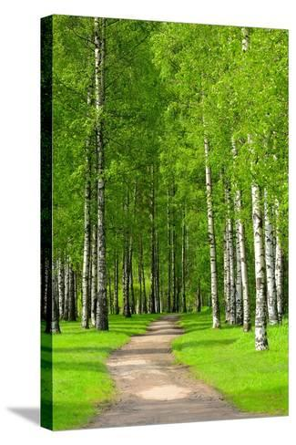 Birch Trees-voltan-Stretched Canvas Print