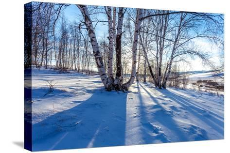 The Snow Covered Birch Forest-06photo-Stretched Canvas Print