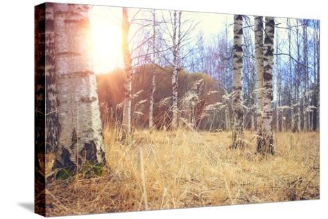 Spring Birch Forest- kichigin19-Stretched Canvas Print