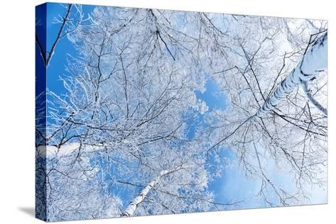 Tops of Trees against the Sky-Alexandr Vasilyev-Stretched Canvas Print