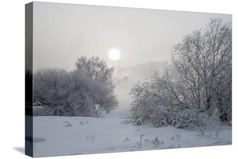 Frost- afrutin-Stretched Canvas Print