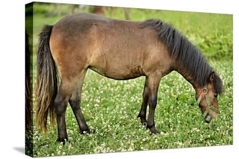 Poney- muro-Stretched Canvas Print