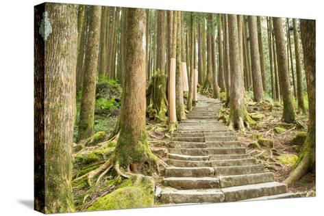 Stairway Alishan Forest- hin255-Stretched Canvas Print
