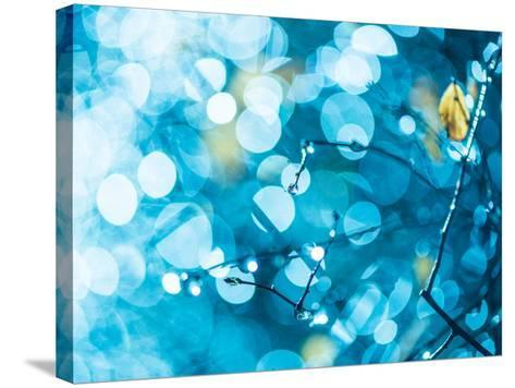 Rainy Flora in Bright Blue Light-Alexey Rumyantsev-Stretched Canvas Print