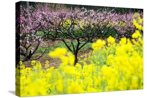Pink Peach Flowers with Yellow Oilseed Rape Blossom.-hanhanpeggy-Stretched Canvas Print
