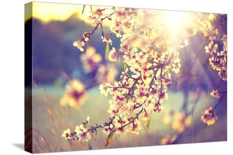 Spring Blossom Background. Beautiful Nature Scene with Blooming Tree and Sun Flare. Sunny Day. Spri-Subbotina Anna-Stretched Canvas Print
