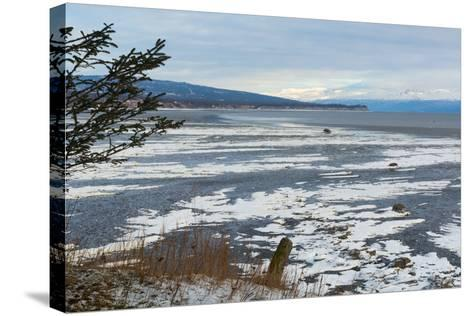 Lonely Tree Overlooking Frozen Tidal Flats-Latitude 59 LLP-Stretched Canvas Print