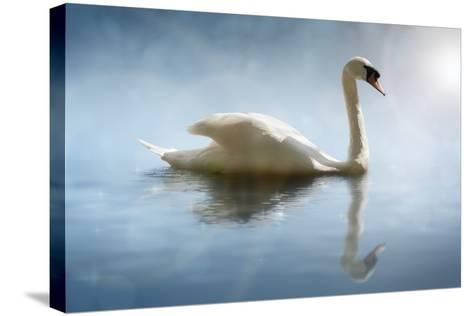 Swan in the Morning Sunlight with Reflections on Calm Water in a Lake-Flynt-Stretched Canvas Print