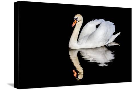 Swan with Reflection-Alan Tunnicliffe-Stretched Canvas Print