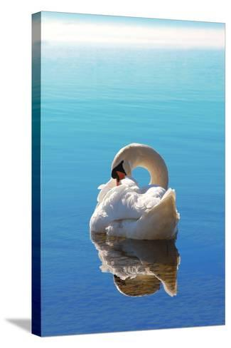 Sleeping Swan in Blue Water-SusaZoom-Stretched Canvas Print
