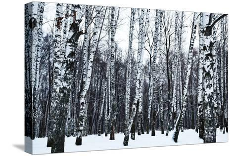 View of Snowy Birch Forest in Winter- vvoe-Stretched Canvas Print