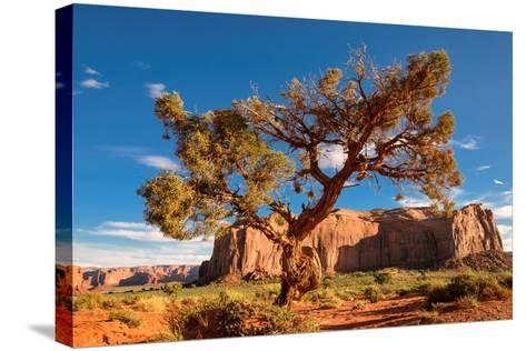 Lonely Tree Still a Life in Monument Valley, Utah-lucky-photographer-Stretched Canvas Print