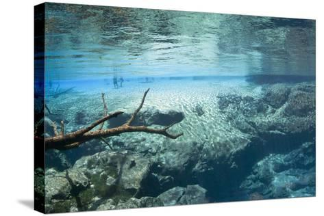 Cypress Springs Underwater Scenic-Phojo-Frog-Stretched Canvas Print