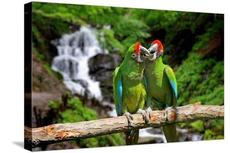 Parrot against Tropical Waterfall Background-byrdyak-Stretched Canvas Print