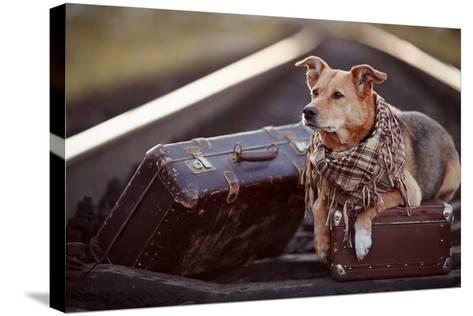 Dog on Rails with Suitcases.-AZALIA-Stretched Canvas Print