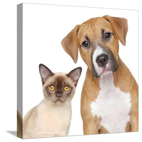Cat and Dog Portrait on A White Background-Jagodka-Stretched Canvas Print
