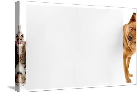 Cat and Dog Banner-websubstance-Stretched Canvas Print
