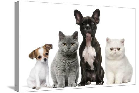 Group of Dogs and Cats in Front of White Background-Life on White-Stretched Canvas Print