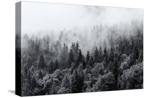 Misty Forests of Evergreen Coniferous Trees in an Ethereal Landscape with Low Laying Mist or Cloud-PlusONE-Stretched Canvas Print