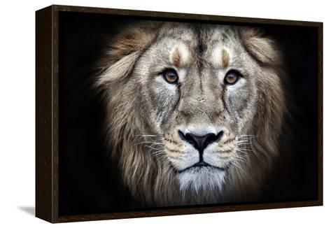 Psychedelic Grunge Style Closeup Portrait of an Asian Lion.-olga_gl-Framed Canvas Print