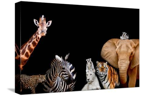 A Group of Animals are Together on A Black Background with Text Area. Animals Range from an Elephan-Art9858-Stretched Canvas Print