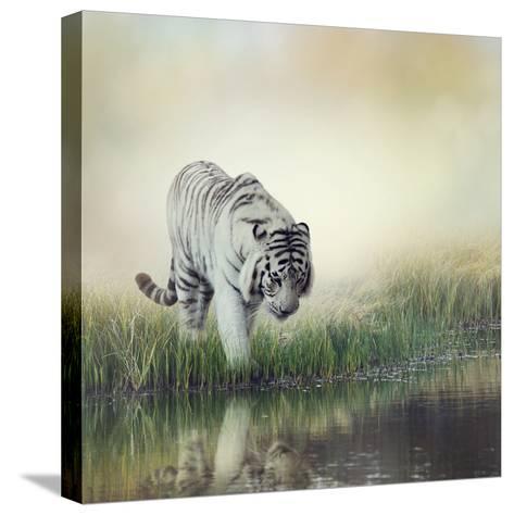 White Tiger near A Pond-abracadabra99-Stretched Canvas Print