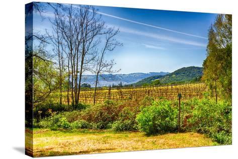 California Vineyards-garytog-Stretched Canvas Print