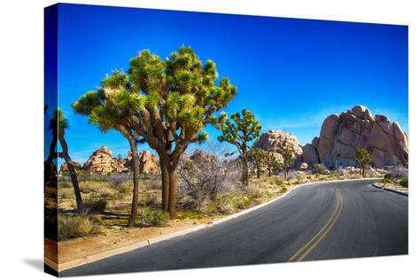 Joshua Tree National Park-garytog-Stretched Canvas Print