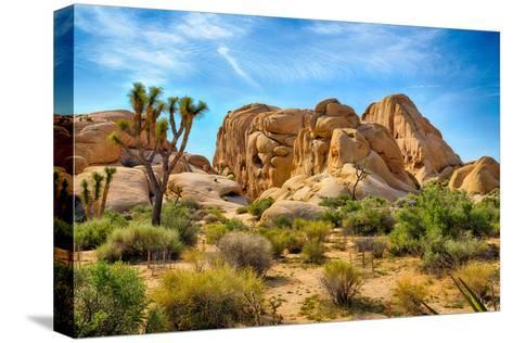 Joshua Tree National Park-garytog-Stretched Canvas Print