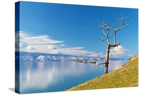 Picturesque Dry Larch on the Shores of Lake Baikal-katvic-Stretched Canvas Print