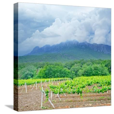 Vineyards-tycoon101-Stretched Canvas Print