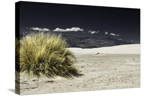 Bush Death Valley- RJPhotography-Stretched Canvas Print