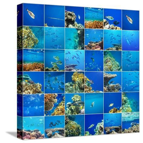 Coral Fish in  Red Sea,Egypt-Andrushko Galyna-Stretched Canvas Print