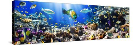 Photo of a Tropical Fish on a Coral Reef-Irochka-Stretched Canvas Print