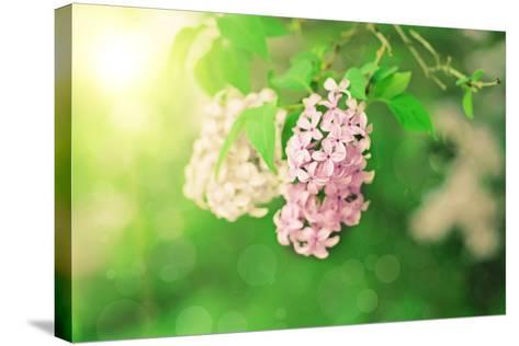 Branch of Lilac Flowers-Roxana_ro-Stretched Canvas Print