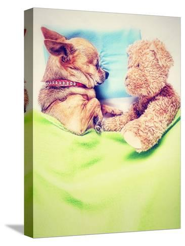 A Cute Chihuahua Sleeping Next to a Teddy Bear-graphicphoto-Stretched Canvas Print