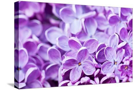 Lilac Flowers Background-Roxana_ro-Stretched Canvas Print