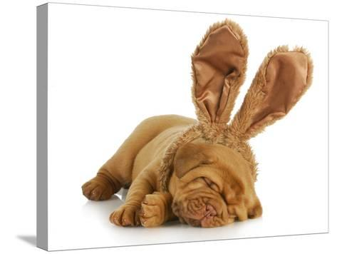 Puppy Wearing Bunny Ears - Dog De Bordeaux Wearing Easter Bunny Ears on White Background-Willee Cole-Stretched Canvas Print