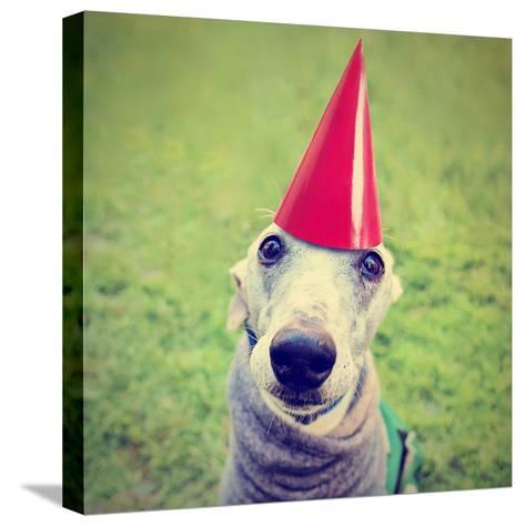 A Cute Dog in a Local Park with a Birthday Hat-graphicphoto-Stretched Canvas Print