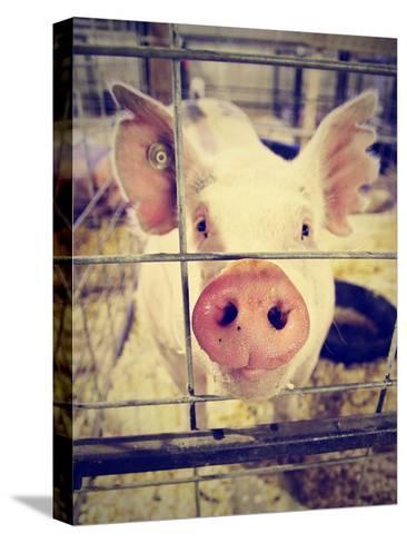 A Pig at a Local Fair-graphicphoto-Stretched Canvas Print