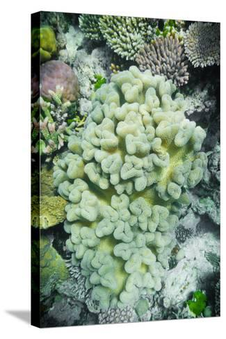 Hard and Soft Coral Reef-meisterphotos-Stretched Canvas Print