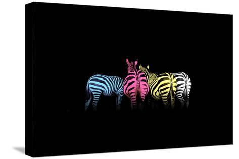 Cmyk Colored Zebras-Jakub Jirsak-Stretched Canvas Print